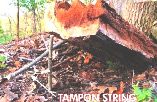 4 Easy Steps To Make a Basic SNARE Trap For Squirrels