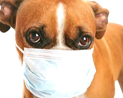 Who Else Wants To Reuse Medical Masks ?