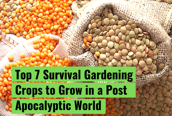 Top 7 Survival Gardening Crops to Grow in a Post Apocalyptic World