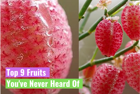 Top 9 Fruits You've Never Heard Of