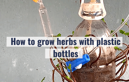 How to grow herbs with plastic bottles (P2)