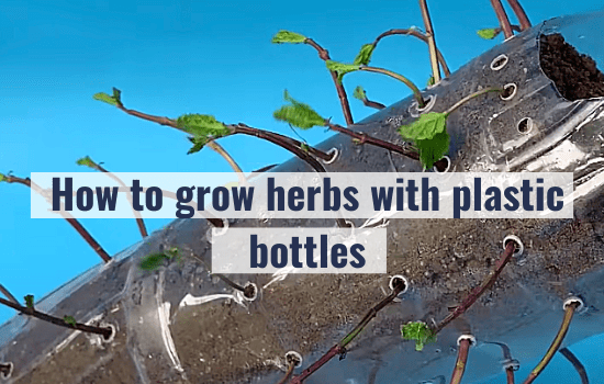 How to grow herbs with plastic bottles (P1)